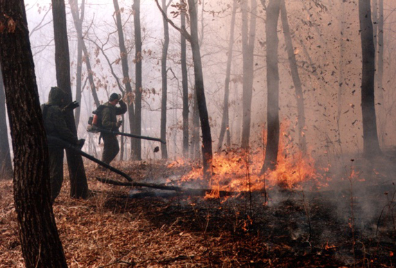 Firefighting volunteers in action. (Photo: Pacific Environment)