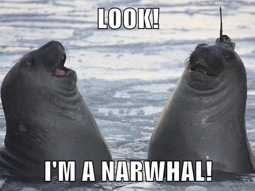 Which Arctic or Subarctic Marine Mammal are You?